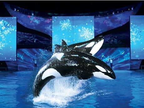 Show Shamu Natal Sea World