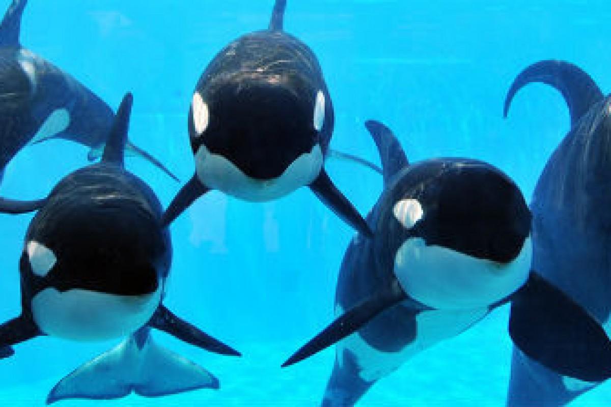 Fim de show e reprodução das baleias no Sea World