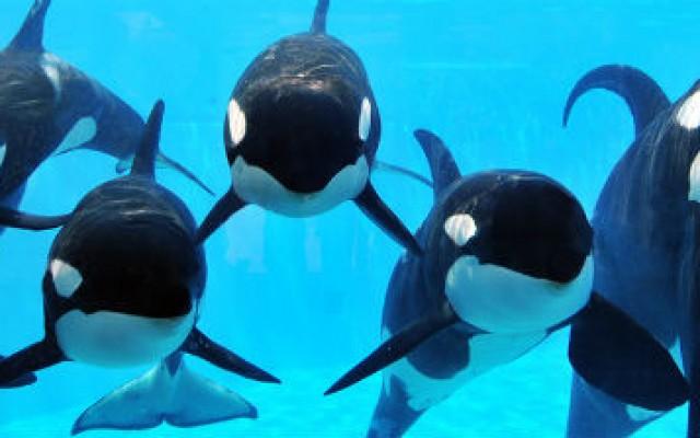 Fim de show e reprodução das baleias no SeaWorld