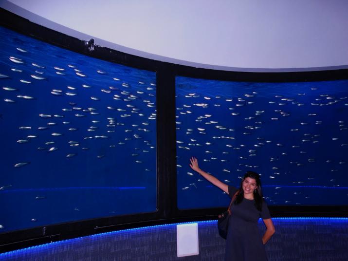 Aquario_Sea_Life Orlando_Sala_Peixes