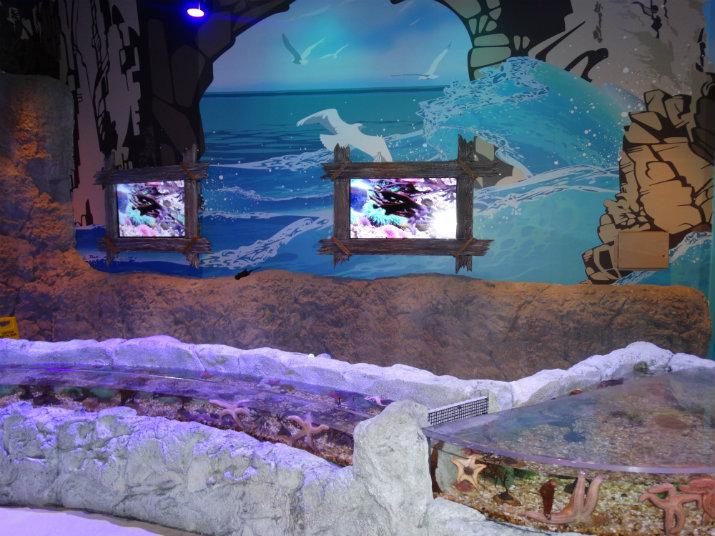 Aquario_Sea_Life Orlando_ambiente