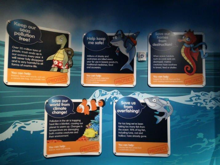 Aquario_Sea_Life Orlando_animais