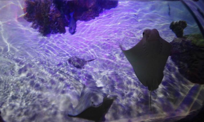 Sea Life Orlando Aquarium Arraia