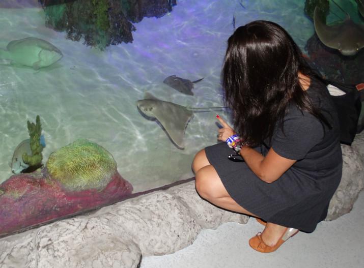 Aquario_Sea_Life Orlando_arraia2