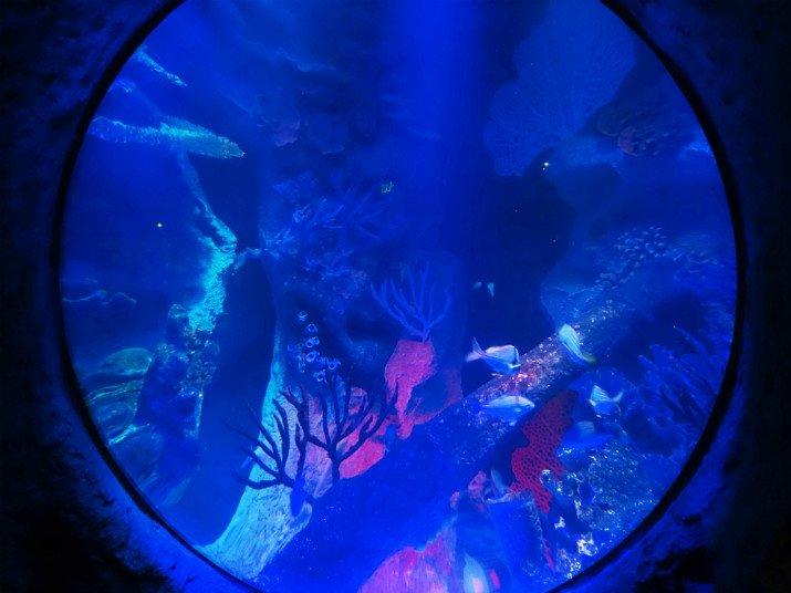 Aquario_Sea_Life Orlando_especies