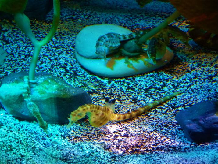 Orlando Sea Life Aquarium Cavalo Marinho