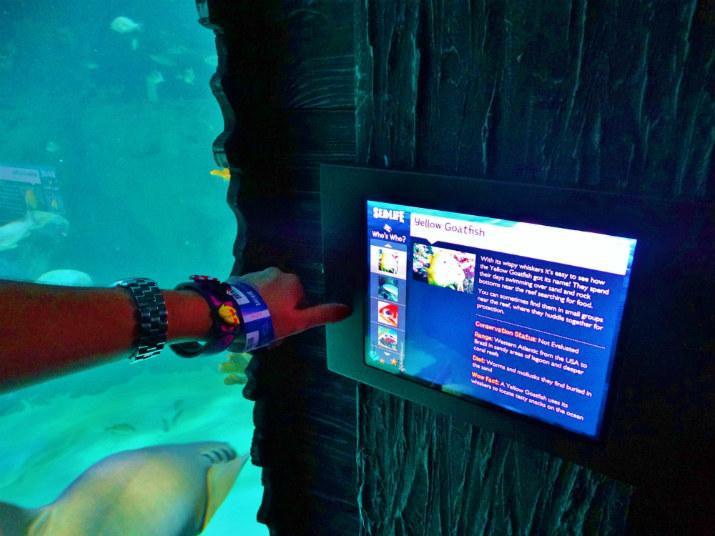 Aquario_Sea_Life Orlando_interatividade