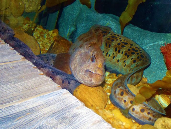 Orlando Sea Life Aquarium Moreia