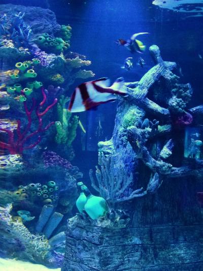 Aquario_Sea_Life Orlando_peixes2
