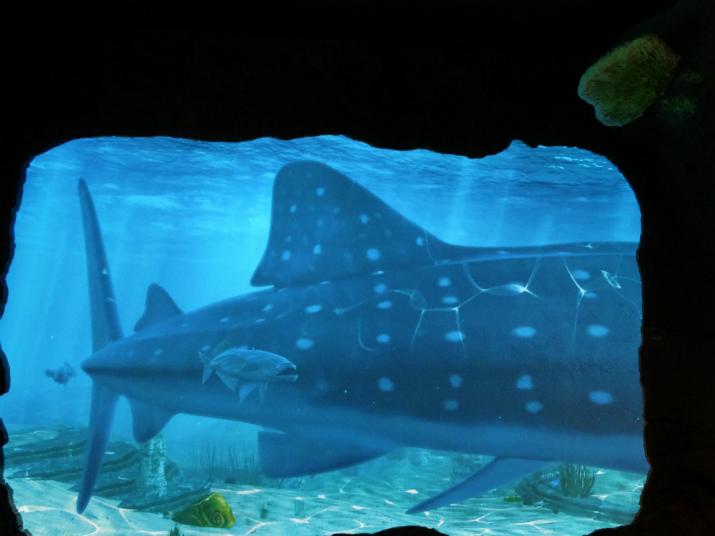 Aquario_Sea_Life Orlando_peixes3