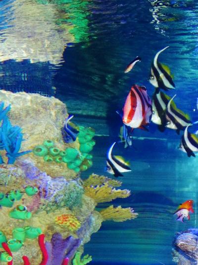 Orlando Sea Life Aquarium Corais