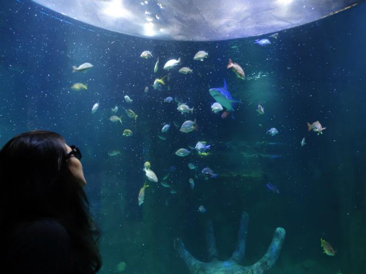 Sea Life Orlando Aquarium Tubarão
