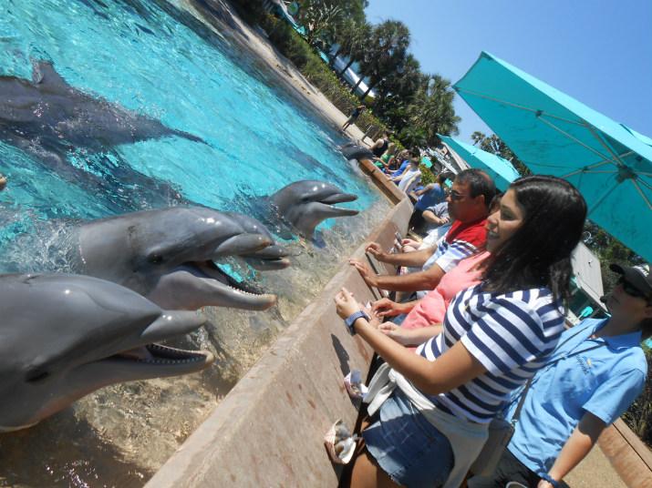 Sea World encontro golfinho