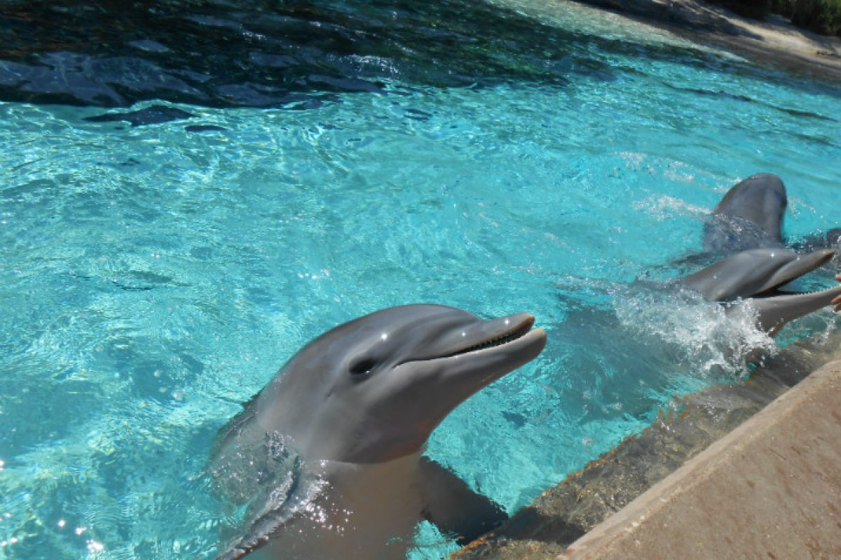 Encontro com golfinhos no Sea World