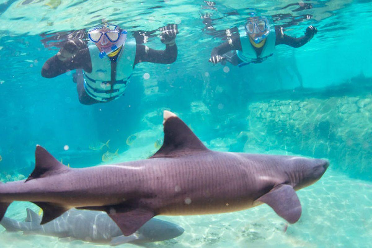 9ded927a41d01 Nado com tubarões no Discovery Cove   Disney de Novo