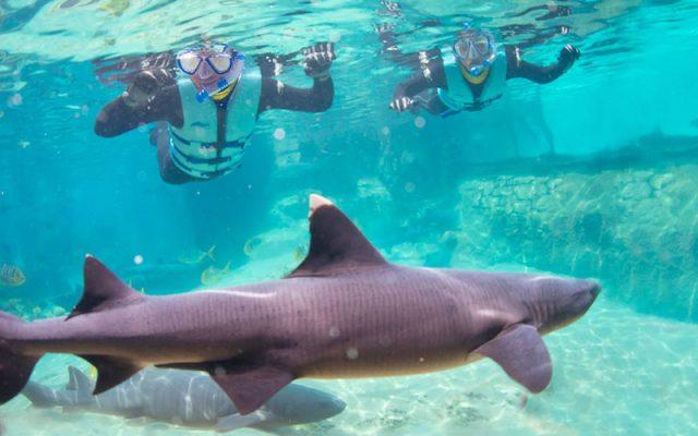 Nado com tubarões no Discovery Cove