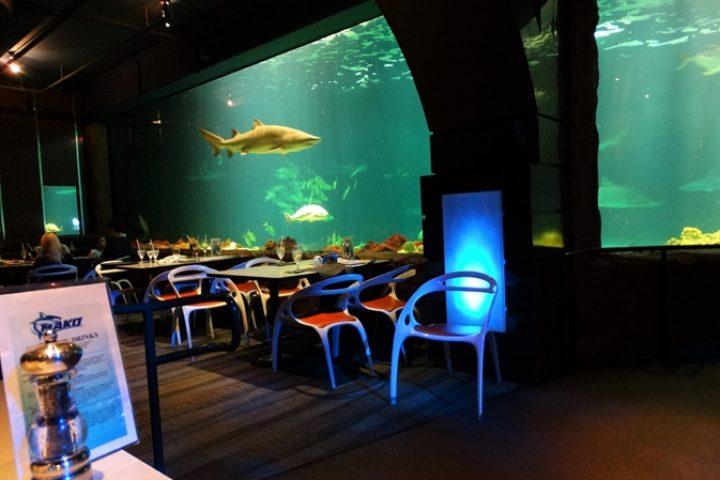 SharksUnderwater Grill: comendo com tubarões no Sea World