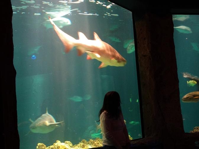 Sharks Underwater Grill Sea World