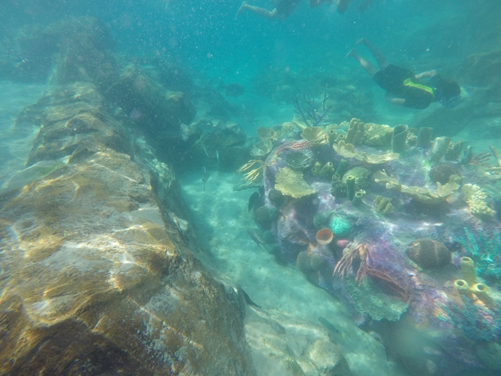 Discovery Cove Orlando Corais