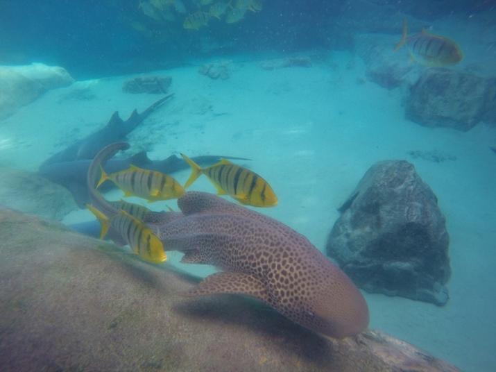 Discovery Cove Orlando tubarão
