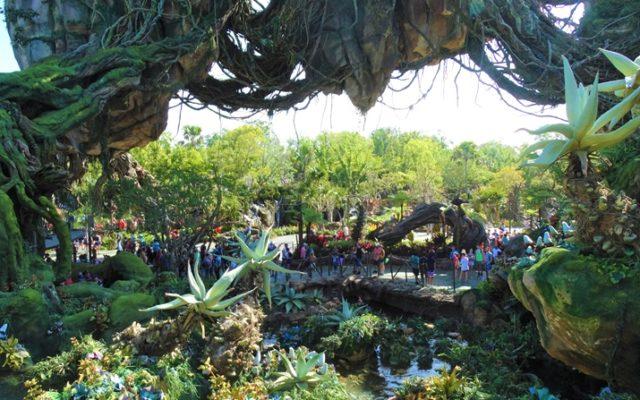 10 motivos para visitar o parque Animal Kingdom