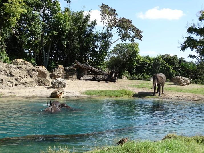 Animal Kingdom Kilimanjaro Safari