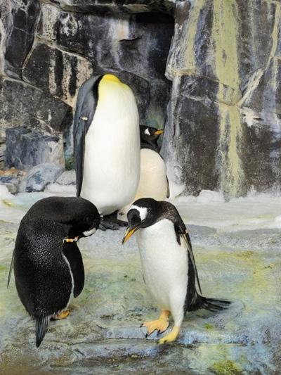 Sea World Pinguim