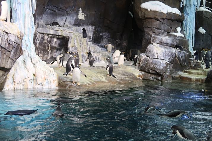 Sea World Empire of the Penguin
