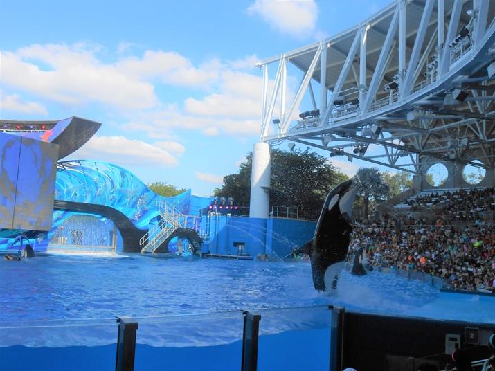Sea World Show Baleias Orcas