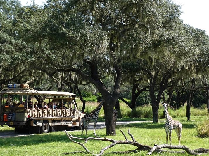 Animal Kingdom Safari