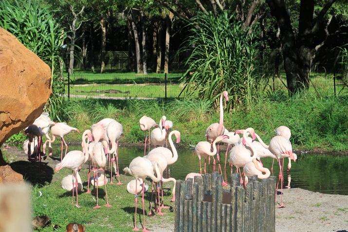 animais animal kingdom lodge
